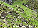 Steep grassy slopes covered in puffins